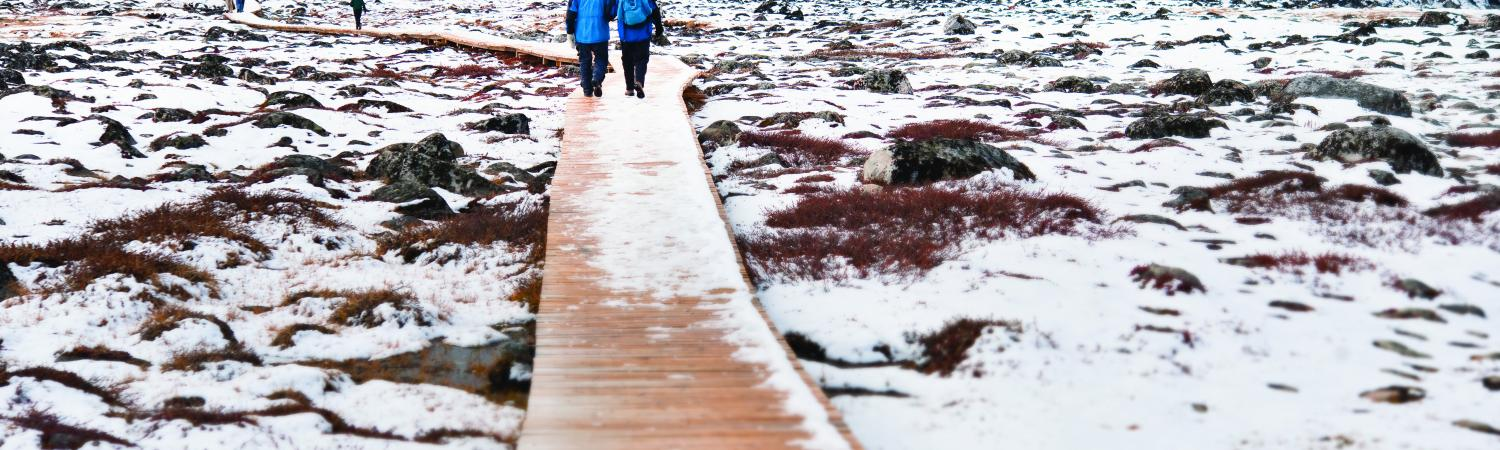 Travelers walking on a boardwalk in the winter arctic tundra.