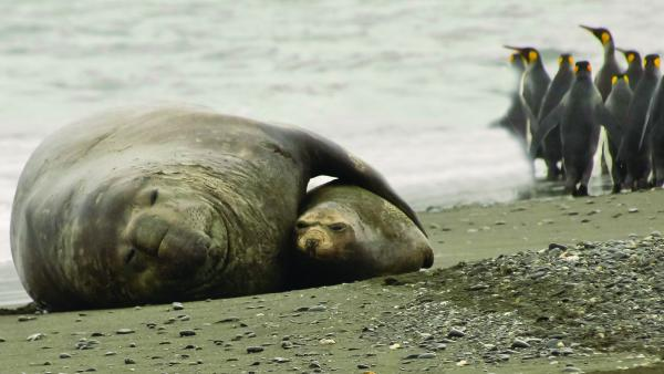 A seal and her cub sleep on the beach.