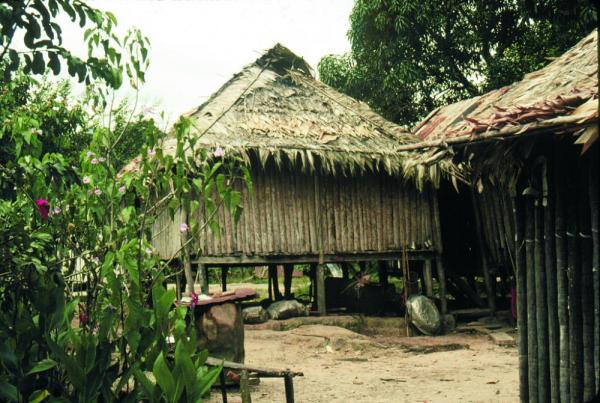 Local housing in the Amazon.