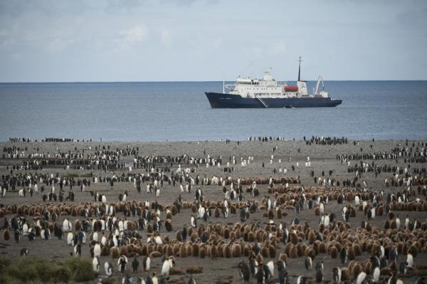 The Polar Pioneer sits off a beach that is covered in penguins.