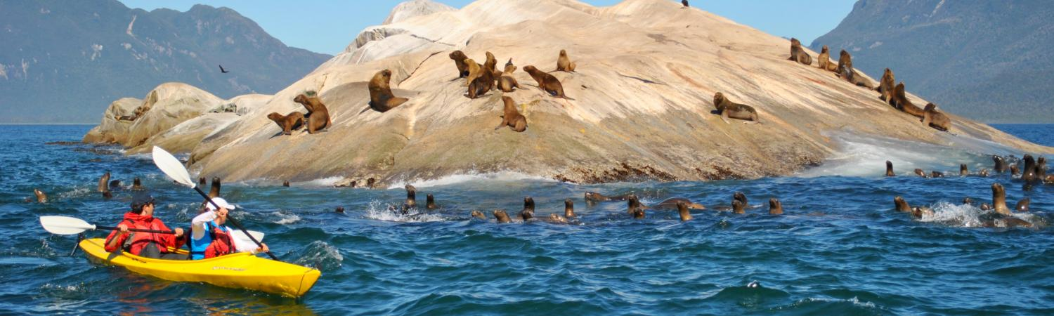 Travelers kayak past a tiny island covered with sea lions.