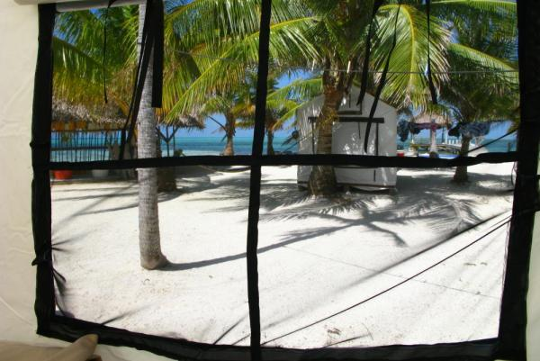 A view from inside one of Glovers Reef Field Camp tents