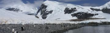 Penguins on a rocky beach in Antarctica.