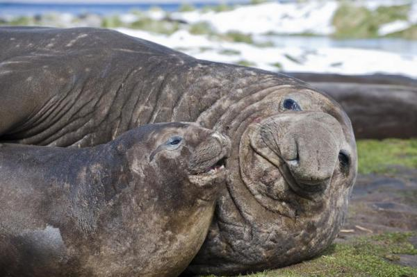 Elephant Seals hanging out on the beach.