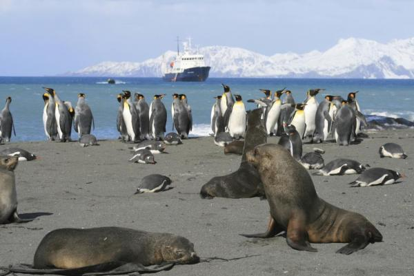 Seals and penguins hanging together on the beach.