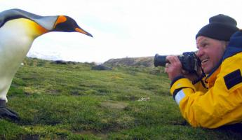A man photographs a King Penguin at only a few feet away.