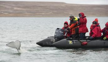 A zodiac tour to see the beluga whale.