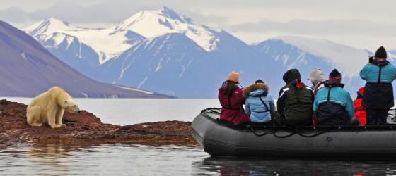 Take a zodiac tour to see polar bears.