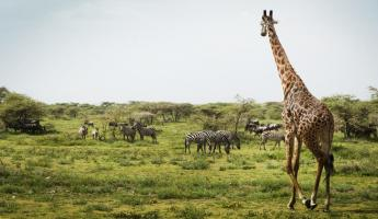 A variety of wildlife in Africa.