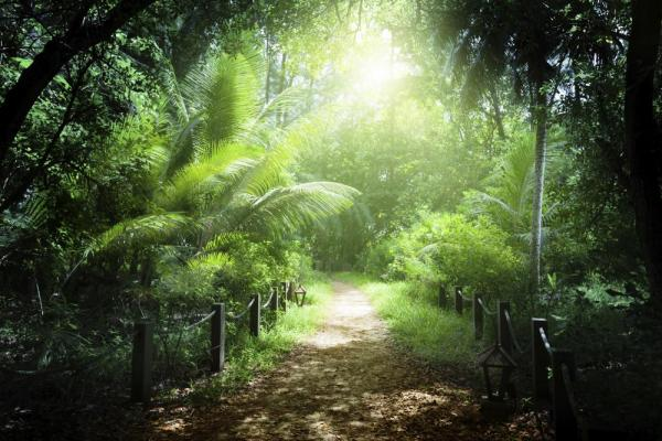 The sun lights up this beautiful tropical forest.