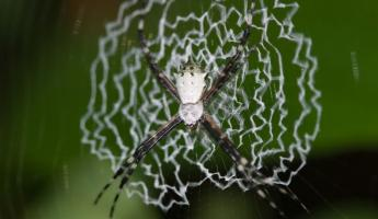 A beautiful spider and his web in the rainforest