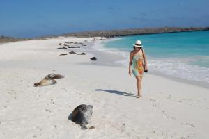 A woman walking on a white sandy beach spotted with sleeping seals.