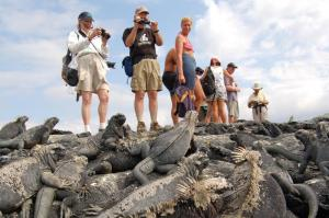 A group of travelers photograph the abundance of iguanas.