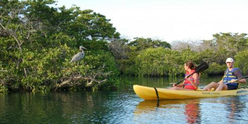 A kayaking trip to see the local bird life of the Galapagos.