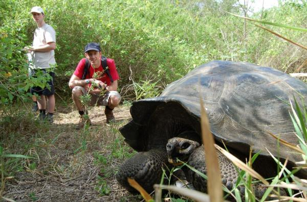 Travelers watch as a giant tortoise hides its head.