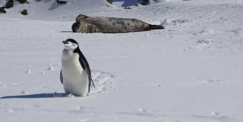 Two of Antarctica's locals