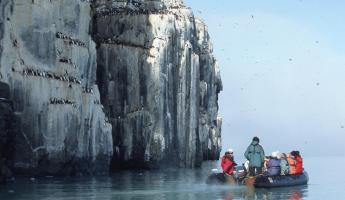 Sail past bird colonies on your Arctic cruise