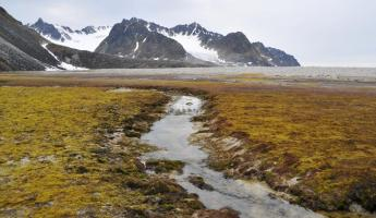 Explore the expansive National Parks of the Arctic