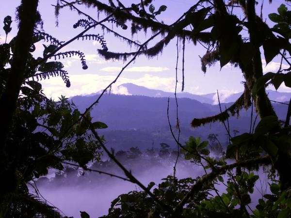 Cloudforest in Mindo