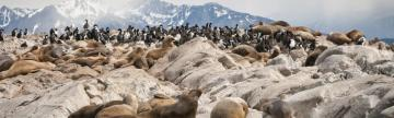 View the seal and cormorant colonies as you sail across the Beagle Channel