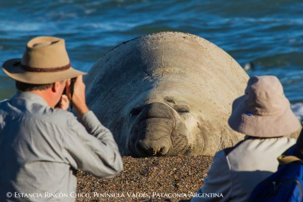Get up close and personal with elephant seals.