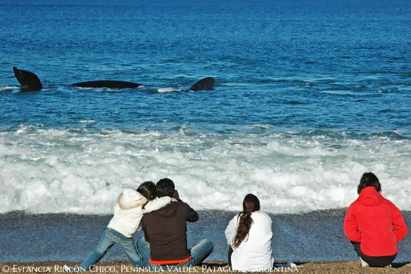 Do some whale watching while staying at Estancia Rincon Chico.