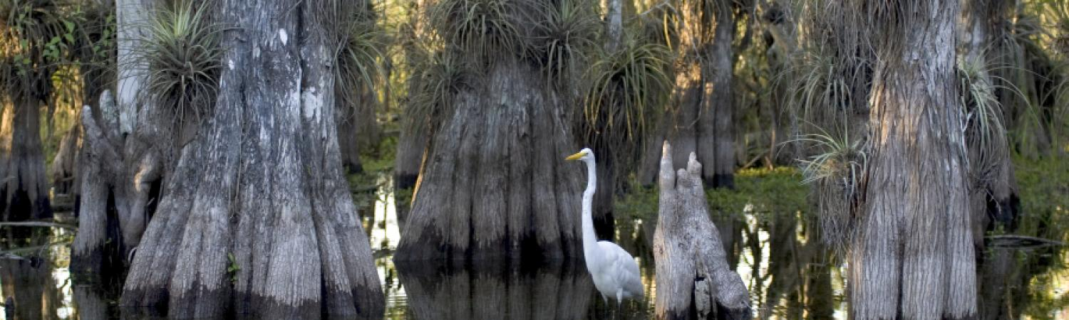 Experience Everglades National Park
