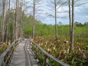 Stroll around Everglades National Park as you sail around Florida