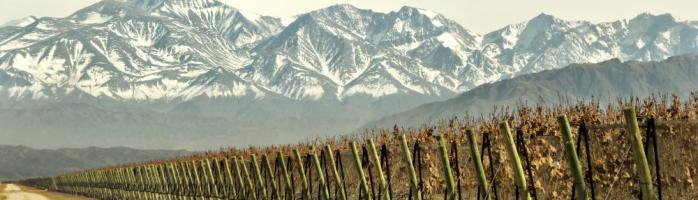 Vineyard with mountain backdrop