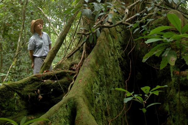 Explore the jungles of Costa Rica.