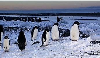 Penguins socializing on the Antarctic Peninsula