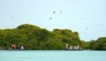 Zodiac to experience the pristine waters and abundant wildlife of Aldabra