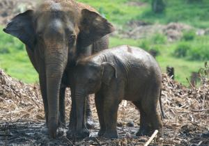 A pair of elephants