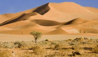 The expansive dunes of the Namib Desert