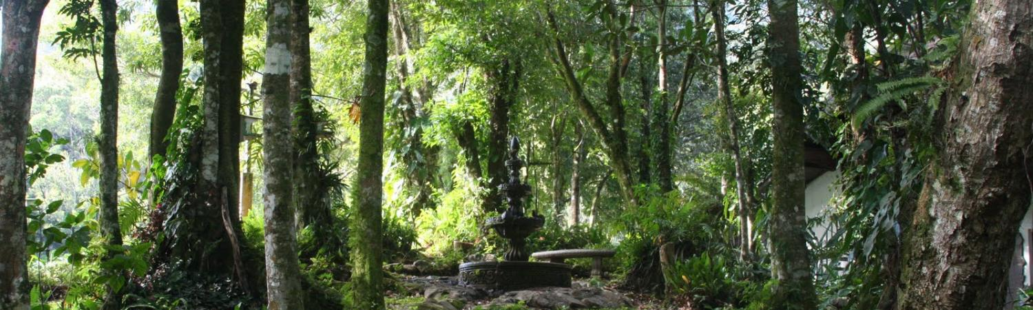 Walk through the lush green forest around Selva Negra Lodge.