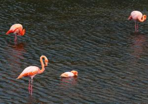 Witness the beautiful and colorful flamingos.