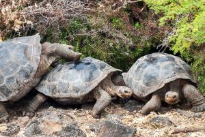 Get to know the friendly tortoises of the Galapagos