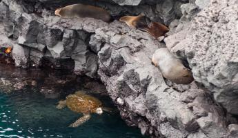 Seals rest on the rocky shores with brightly colored crabs while sea turtles swim below.