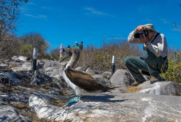 A traveler photographs the amazing blue-footed boobie.