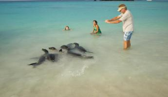 Travelers swimming with a group of friendly seals.