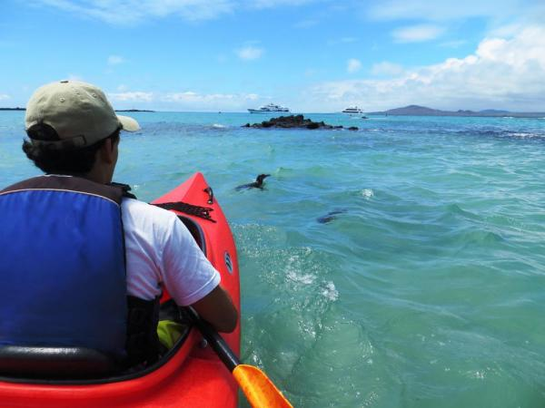 Kayak through the beautiful clear waters full of unique wildlife like swimming penguins.