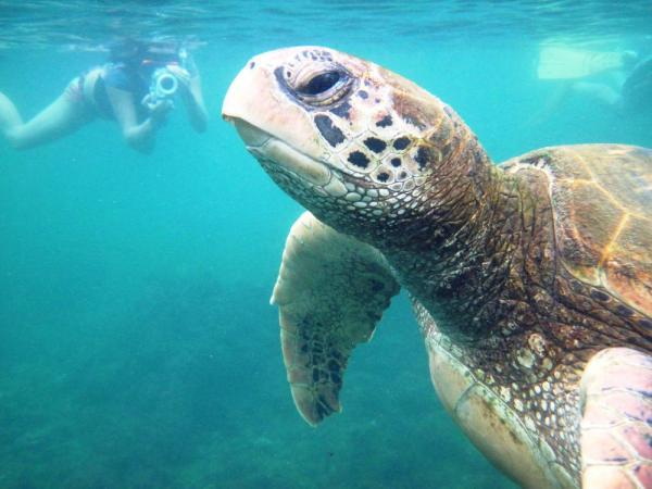 Take a swim with sea turtles on your Galapagos adventure.