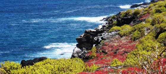 The beautiful colorful shores of the Galapagos.