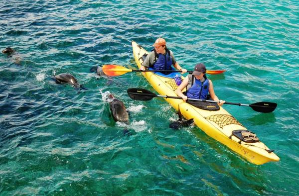 Kayak with friendly and curious sea lions.