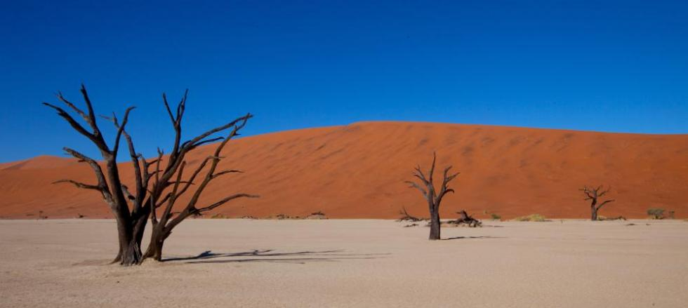 Trees struggle to survive in these desert environments