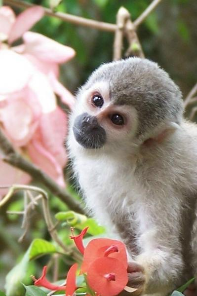 A monkey and his flower