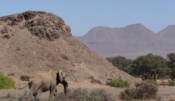 An elephant wanders through the valley