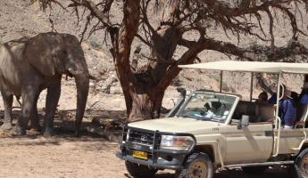 Encounter elephants on a wildlife excursion