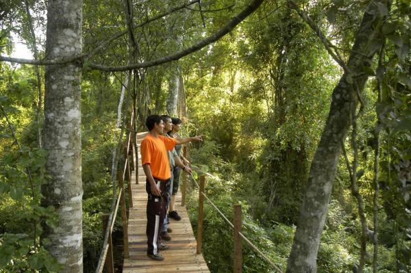 Take a walk through the woods on convenient boardwalks