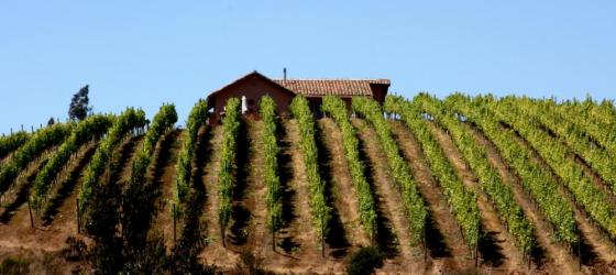 Neslted in a world renown vineyard, enjoy a stay at Casa Marin on your Chile tour